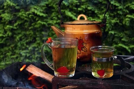 лесной чай растение