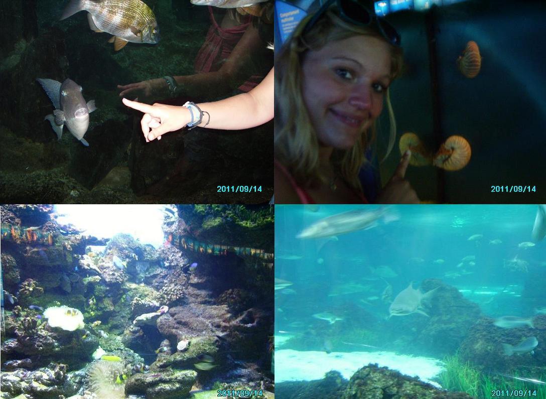 oceanarium-Barcelona
