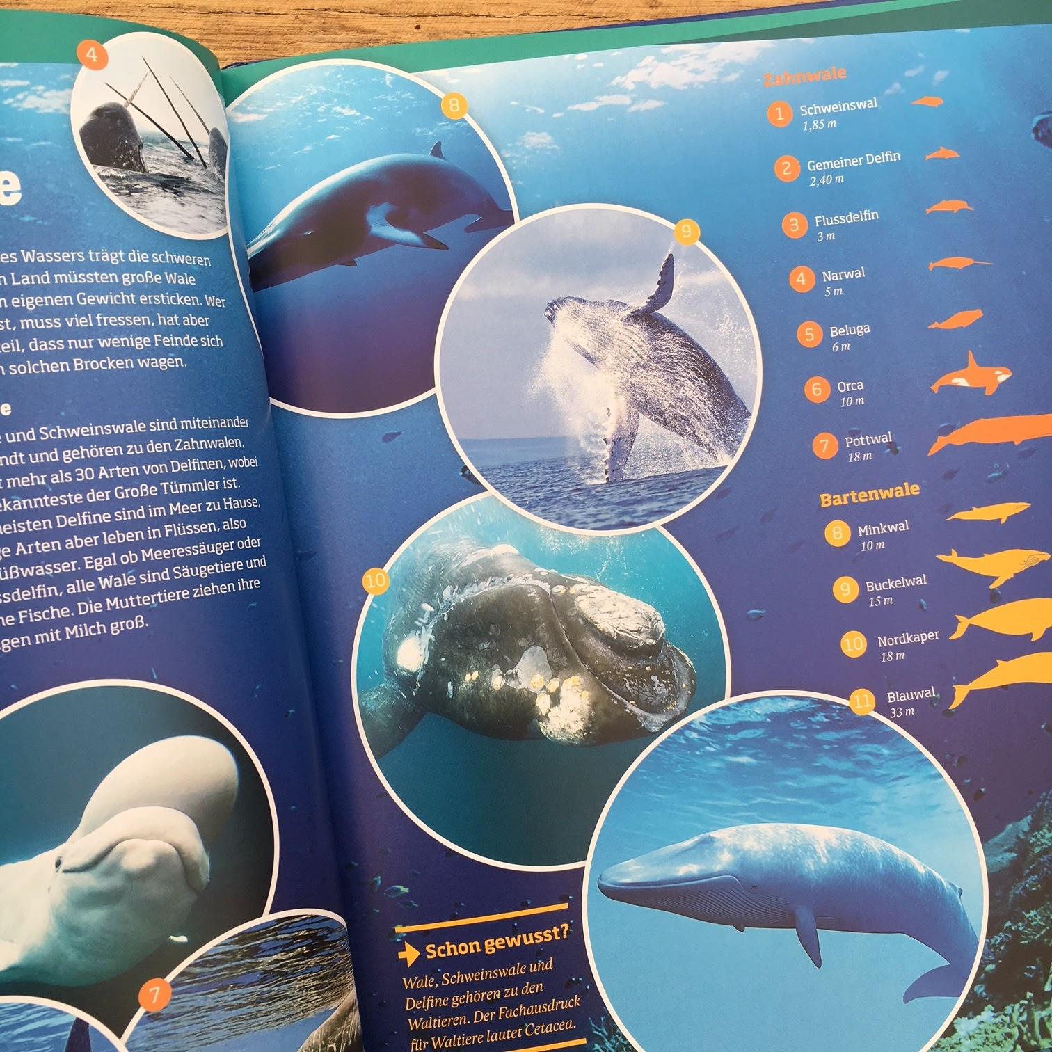 Wale Informationen