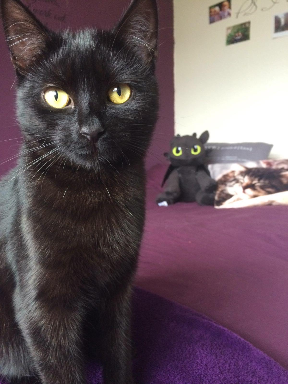 Funny cats - part 216, cute cat photos, adorable cat pics, best cat pic