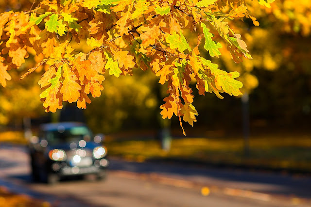 car, road, autumn, tree, leaves, dazzling sun