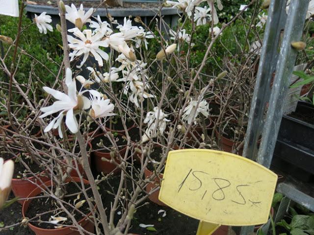 Visita a viveros shangai en madrid paisaje libre for Vivero las magnolias