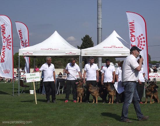 61ème nationale d'élevage de bergers allemands à Pérols