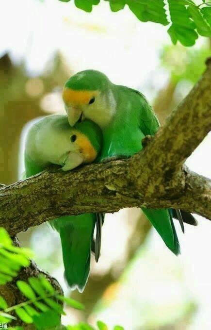 Fotos de Aves e Pássaros