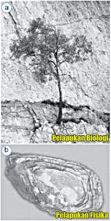 Tenaga pengubah bentuk muka bumi yang berasal dari luar permukaan bumi dinamakan tenaga e Proses Alam Eksogen-Pelapukan, Erosi, dan Abrasi