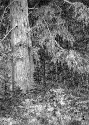 art drawing charcoal nature evergreen tree forest mountain