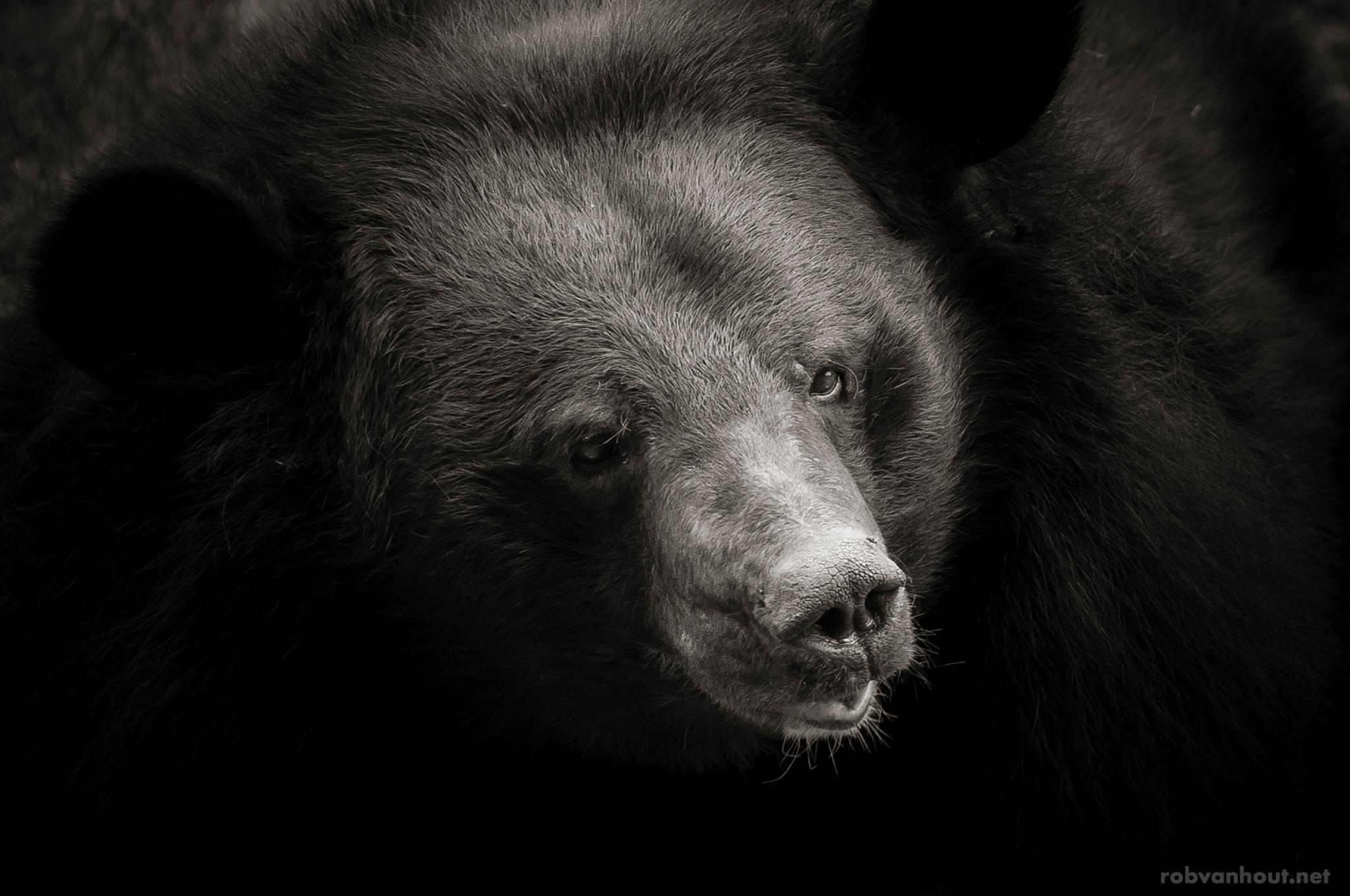 Moon Bear — Anholter Bärenwald