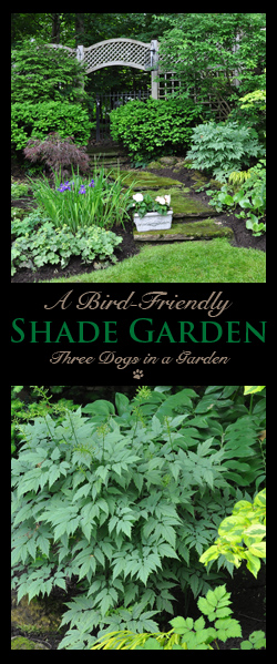 A Bird-Friendly Shade Garden