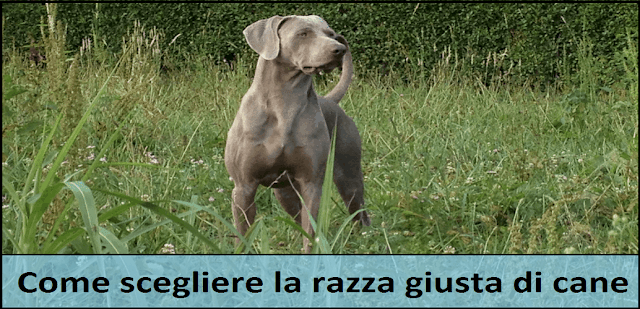 aprire allevamento di cani di razza