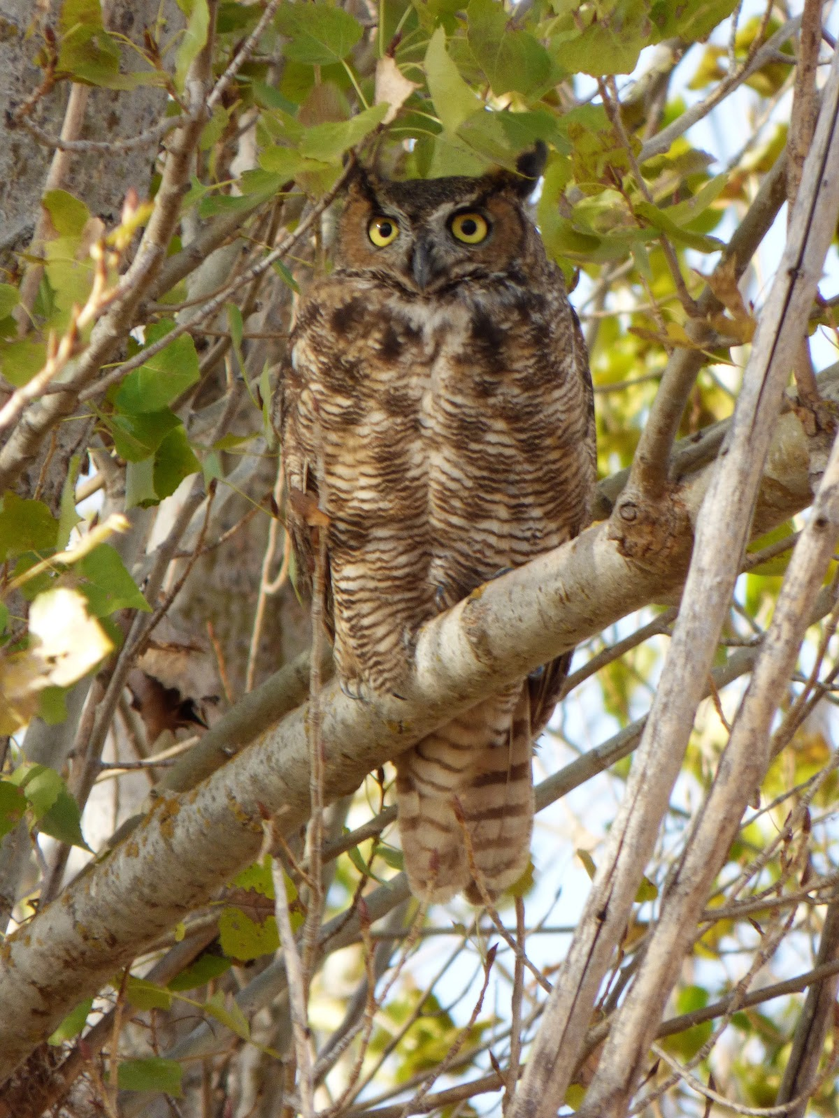 Why do some of us become owls, and others - larks 47
