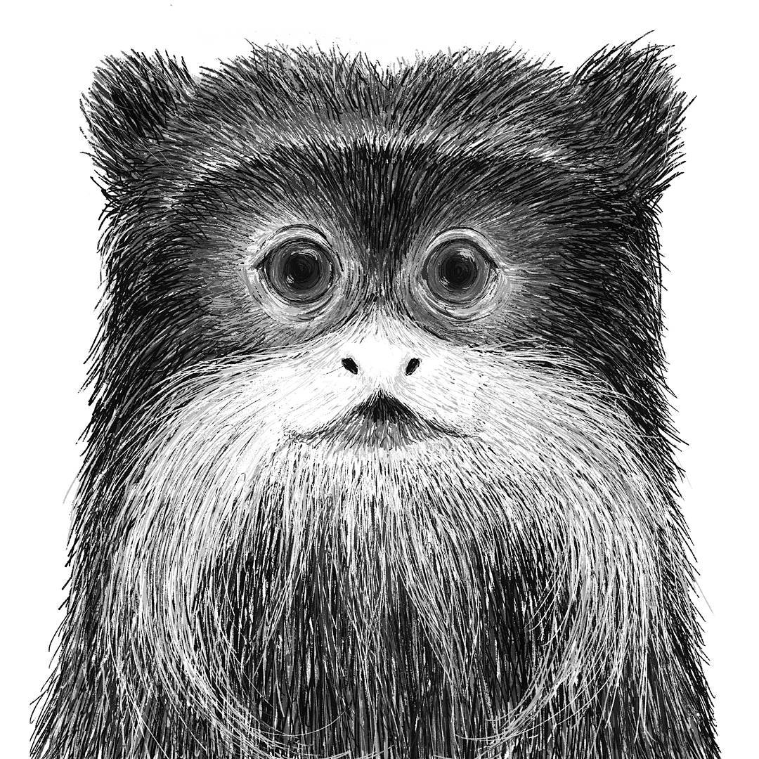 08-Emperor-Tamarin-Rohan-Sharad-Dahotre-Eclectic-Illustration-Styles-and-Exotic-Animals-www-designstack-co