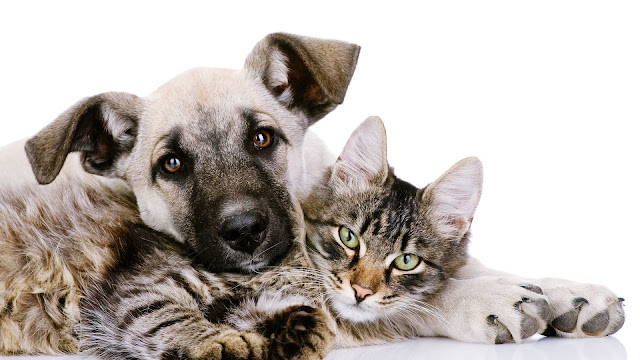 Cat and Dog Wallpaper 6