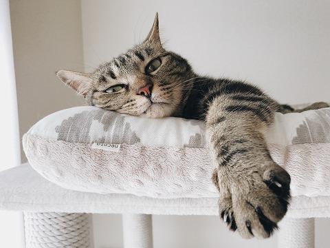 だらっと前足を伸ばしてるキジトラ猫