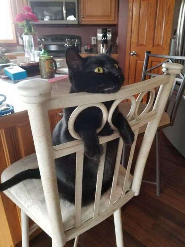 Funny cats - part 292, funny cats, best cat image, best cats