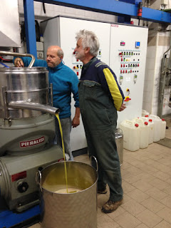 Olive Harvest Tuscany Italy Frantoio pressing olive oil green gold
