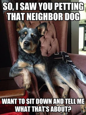 Explain This To Me? #Doghumor #dogoftheday #dogsitting #ilovemydog #instapuppy #dogstagram #lovedogs #lovepuppies