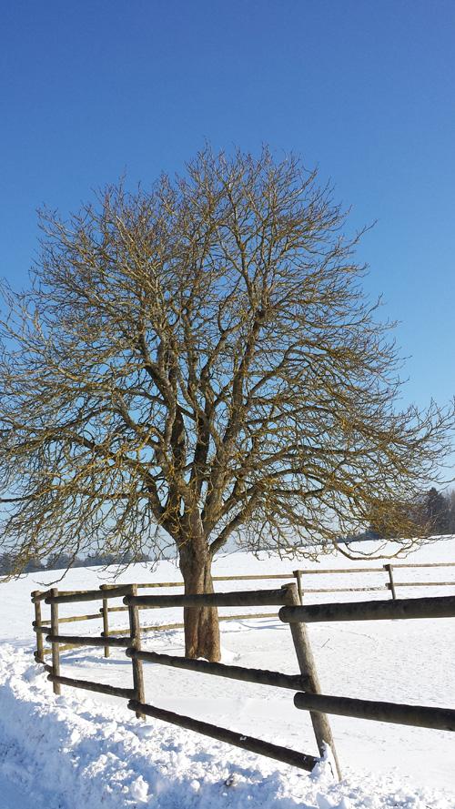Winter Schnee Annette Diepolder Baum Sonnenschein