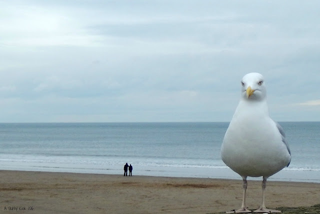 Playing-with-perspective-and-a-seagull