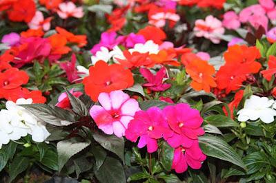 Resultado de imagem para Saiba quais são as flores sazonais de fevereiro