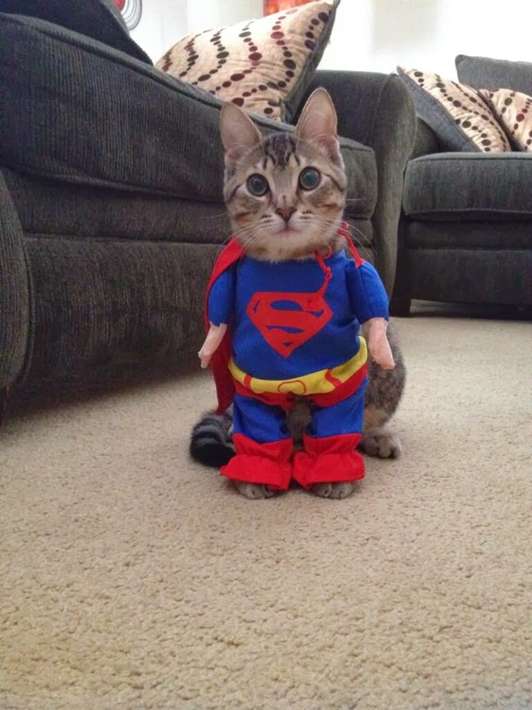 Funny cats - part 93 (40 pics + 10 gifs), cat wears Superman costume