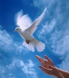 A paz é uma conquista íntima do espírito em prova