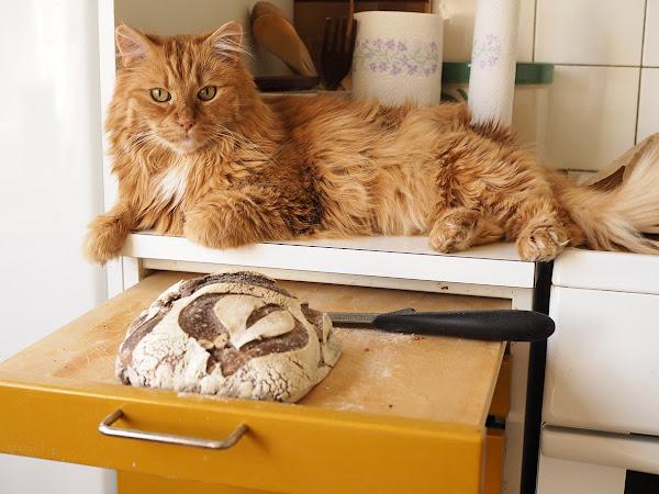 Kissavahtina Turussa ja pitihän sitä jotain syödäkin.