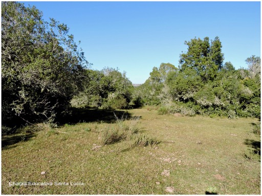 Vegetación de monte criollo en Villa Serrana - Chacra Educativa Santa Lucía