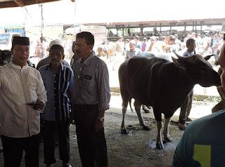 Bupati Bireuen : Harga Daging Lembu Aceh Rp150.000 Per Kilogram