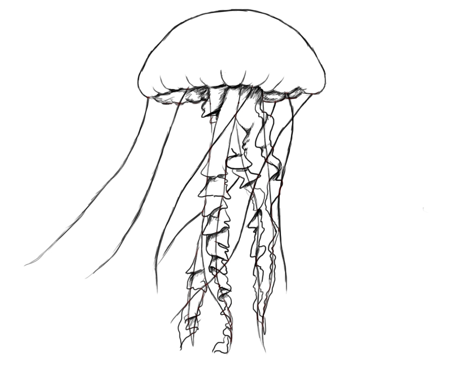 It's just a photo of Soft Jellyfish Line Drawing