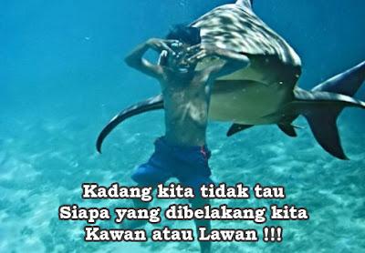 hiu dan manusia berteman lucu