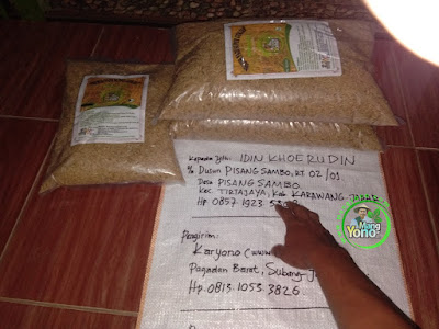 Benih Pesanan   IDIN KHOERUDIN Karawang, Jabar (Sebelum Packing)