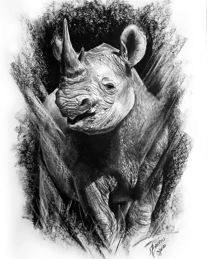 12-Rhino-Rhinoceros-Natalya-Bassani-www-designstack-co