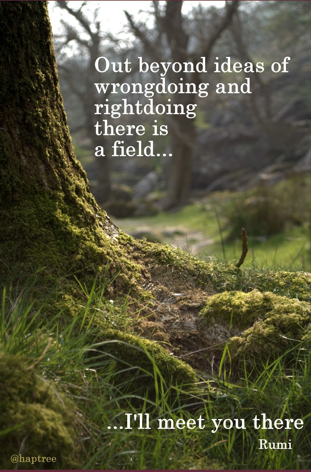 rumi quote field will meet you there