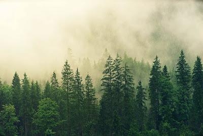 Cara Cepat Mengingat Nama Ilmiah Tumbuhan Dengan Mudah