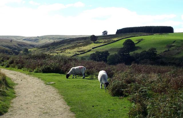Haworth-Moor-Penistone-Country-Park
