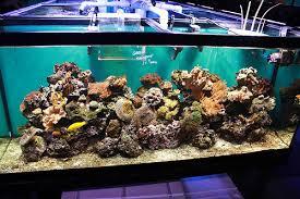 cara merawat aquarium agar tetap bersih dan tidak amis