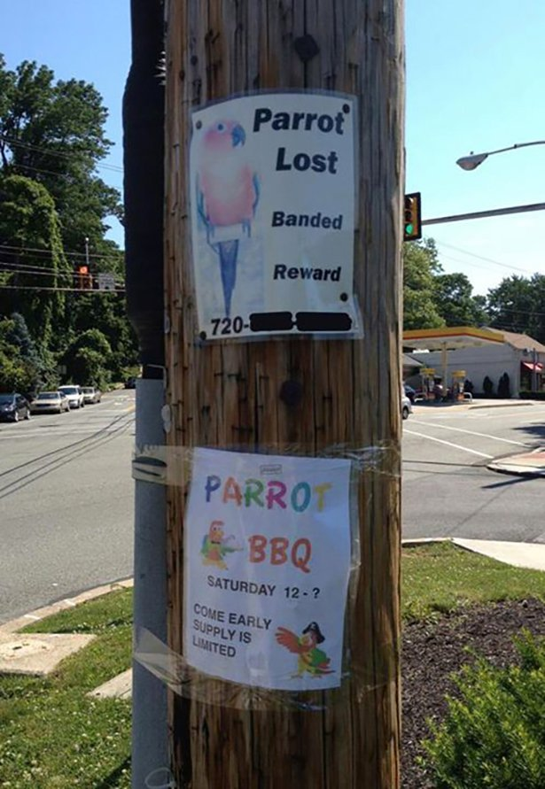 Funny Parrot Lost and Found Sign Photo Picture