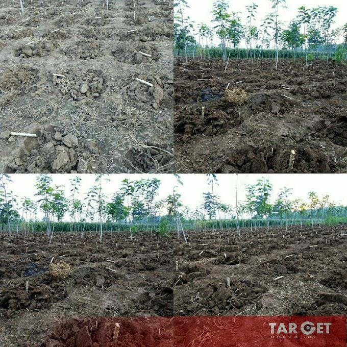 Masyarakat Petani Hutan Resah, Diperlakukan Petugas Perhutani Dengan Sangat Arogansi dan Semena Mena