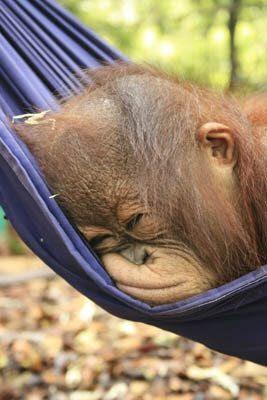 Fotografia de mono durmiendo en una amaca