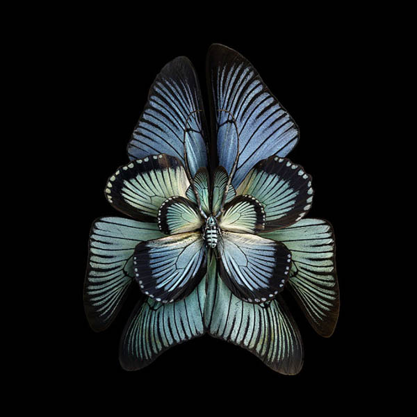 03-Seb-Janiak-Photographs-of-Butterfly-Wings-to-Resemble-Flowers-www-designstack-co