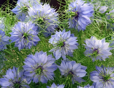 Выращивание-цветов- из-семян