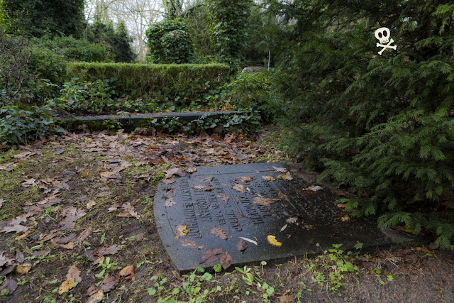 Un tejo crece lento y majestuoso al albur de una lápida funeraria.