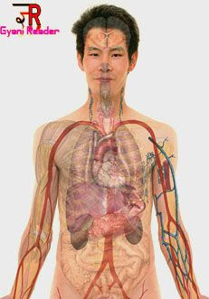 Amazing facts about human body  interesting facts about human brain  interesting facts about human behavior  funny biology facts  amazing facts about human body in hindi  amazing facts about human body with pictures  strange but true facts about humans 10 incredible human body facts  human body facts quiz