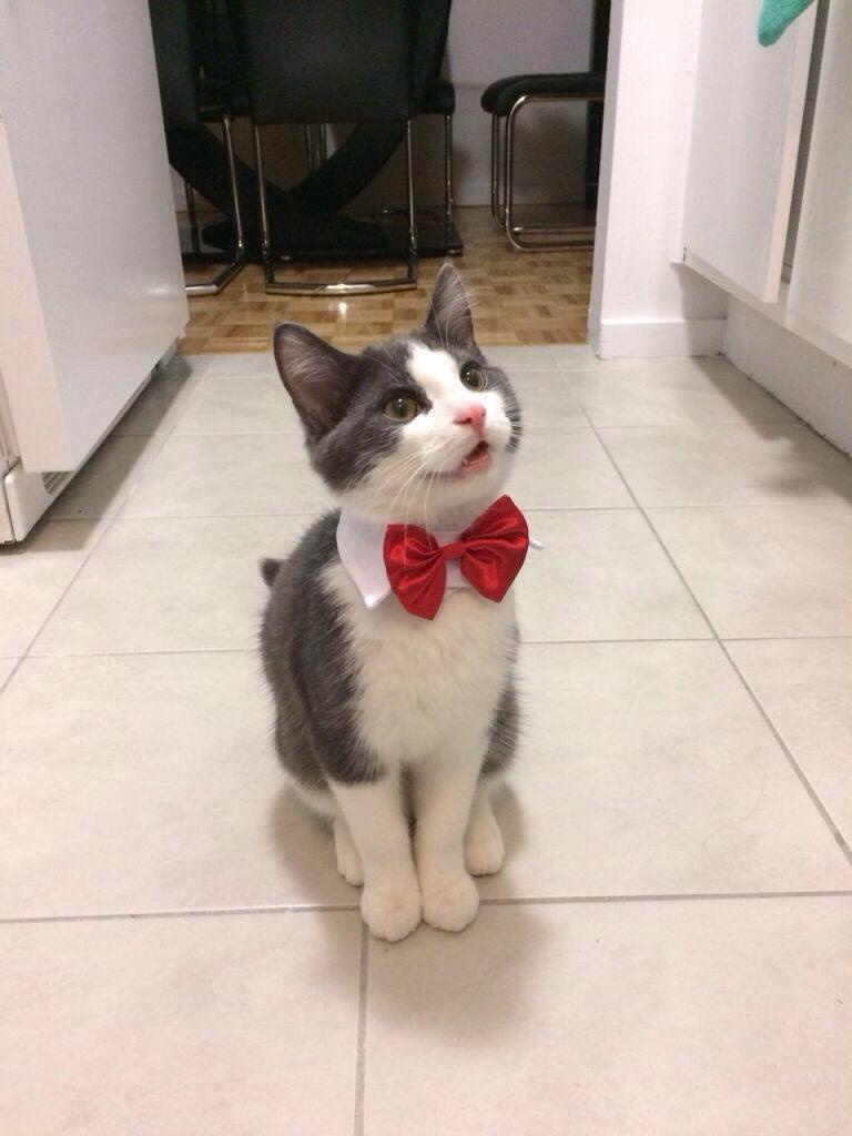 Funny cats - part 254, cute cat images, best cat photos