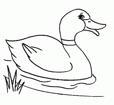 Wild Duck On Forest Coloring Pages For Print