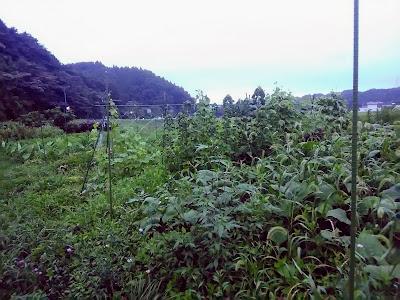 草茫々の畑