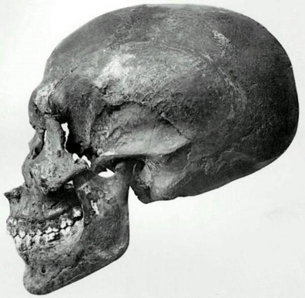 Perfil del cráneo hallado en la tumba KV55.
