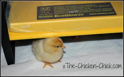 Brinsea EcoGlow Chick Brooder