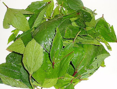 Gongura Foods not to eat for wound healing