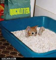 A small kitten drowning in litter